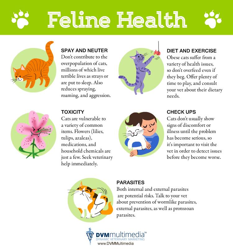 feline health   the cat s meow cat clinic