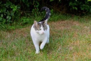 cat-175997