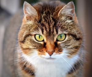 cat-300572