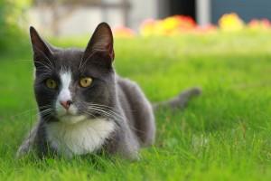 cat-318794