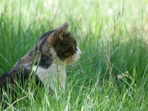 cat-327053
