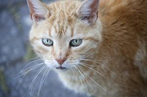 cat-388497_640
