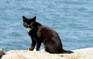 cat_beach