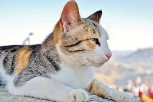 cat-115701
