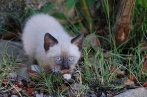 cat-166807
