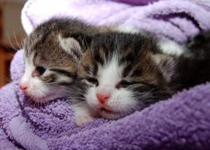 cat-205757