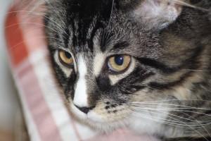 cat-221977