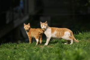 cat-237185