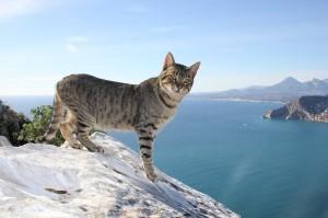 cat-264077_640