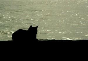cat-273753_640