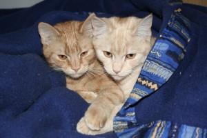 cat-83333